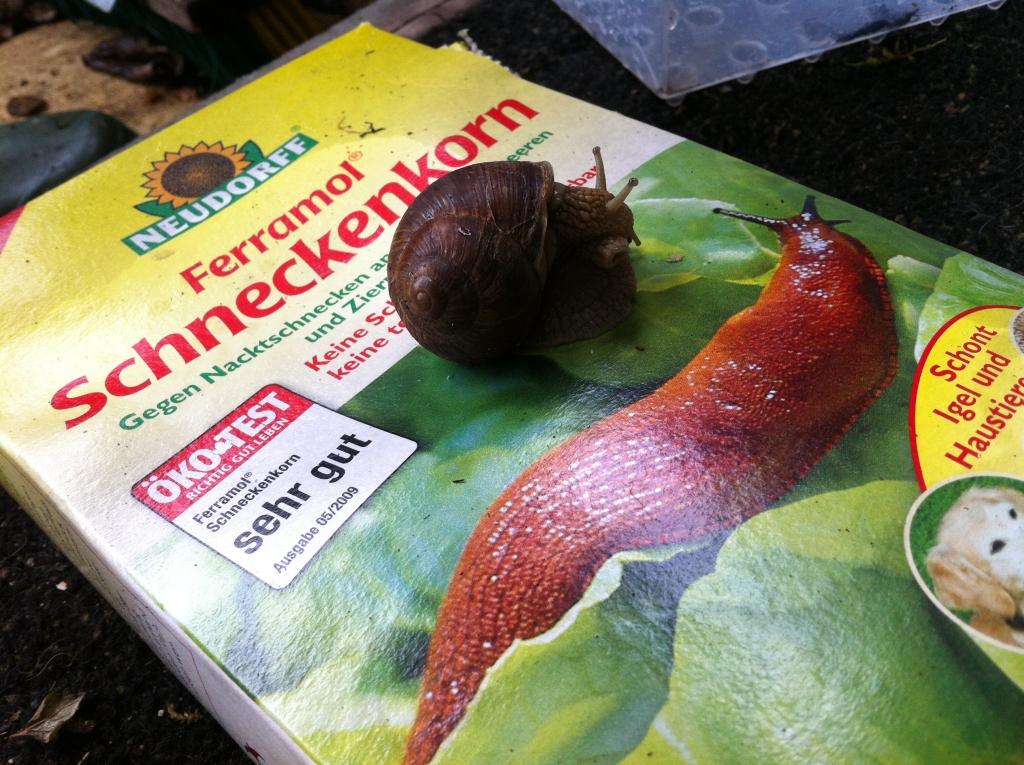 Schneckenkorn wird vor allem gegen gefräßige Nacktschnecken eingesetzt. Die Weinbergschnecke hingegen steht unter Naturschutz.