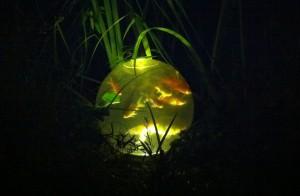 Fischkugeln bei Nacht - ein spektakulärer Anblick: Einfache Teichstrahler beleuchten die Kugel von unten (Foto: Handtuchgarten.de)