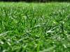 Auch im Schatten kann dichter, sattgrüner Rasen gelingen - dank spezieller Samenmischungen für Schattenrasen.