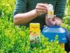 Mit biologischen Präparaten wie Neudorff Raupenfrei Xentari können Sie den Buchsbaumzünsler bekämpfen (Foto: Neudorff)