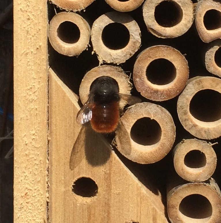 Insektenhotel bestellen: Wildbienen gehören zu den ersten Bewohnern in einem Insektenhotel.