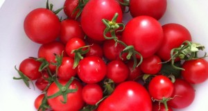 Für den Freilandanbau sind besonders widerstandsfähige Tomaten-Sorten geeignet.