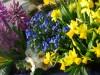 Start in die Gartensaison: Mit der Garten-Checkliste März sind Sie bestens vorbereitet.