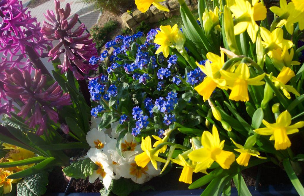 Garten Checkliste Marz Gartenarbeiten Im Fruhling