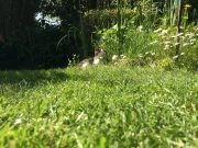 Der perfekte Rasen ist kein Hexenwerk - wenn man einige grundlegende Tipps beachtet.