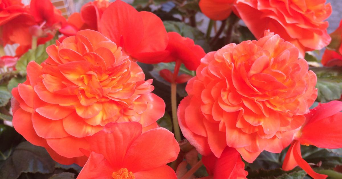Qvc Gartentag Am 5 Februar Keyzers Solithia Co Handtuchgarten